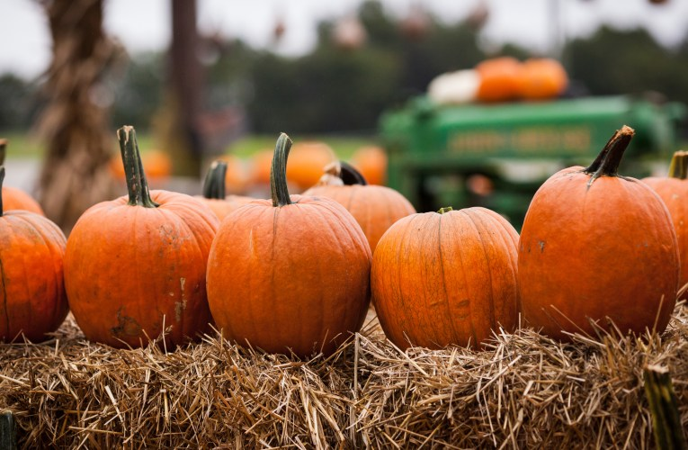 7 Farms to Visit Near Pittsburgh this Fall